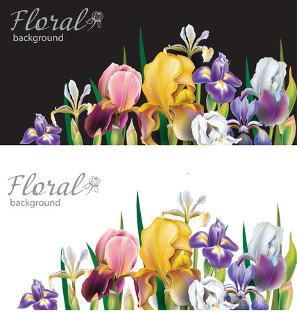flowers background: Banners with Iris flowers