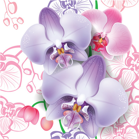 orchid: Seamless floral pattern with orchid