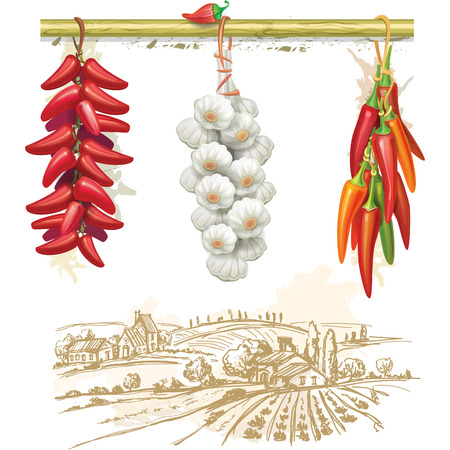 garlic: Strings of red peppers against country landscape