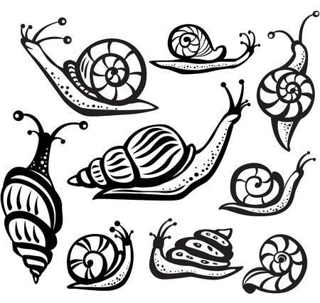 caracol: Conjunto de caracoles en blanco y negro Vectores