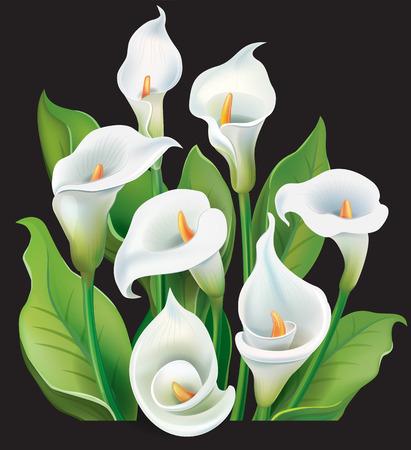 Boeket van witte calla lelies op een zwarte achtergrond Stock Illustratie