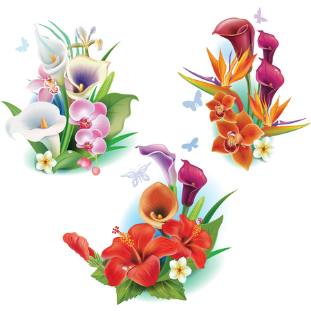 tropical: Arrangement from tropical flowers Illustration