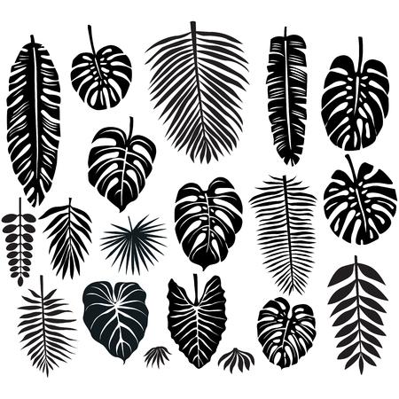 Jogo das folhas tropicais