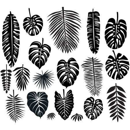 tropical forest: Set of Tropical Leaves