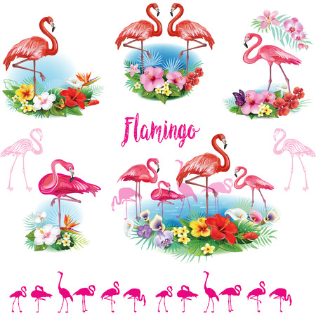 bloom bird of paradise: Set of Flamingoes and Arrangement from tropical flowers