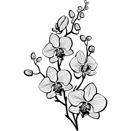 Skica květy orchidejí