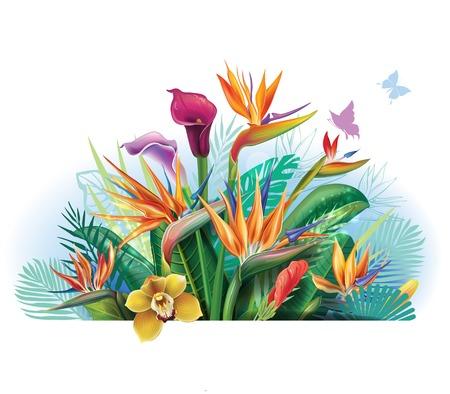 strelitzia: Tropical arrangement with Strelitzia flowers. Illustration
