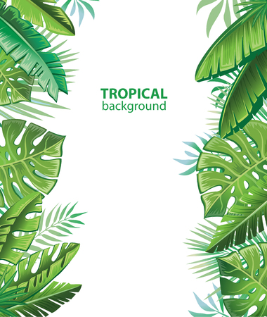 Tropical leaves and plants Illustration