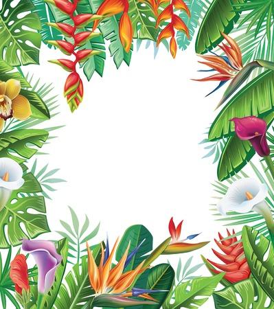 strelitzia: Tropical plants and flowers