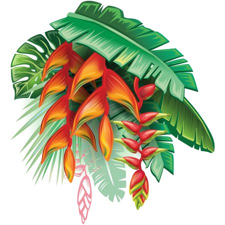 tropical: Tropical plants and Heliconia