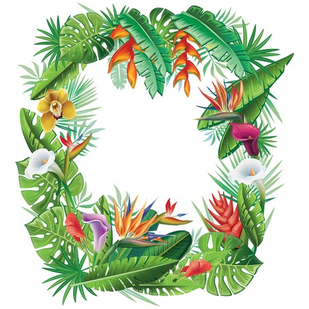 bloom bird of paradise: Frame from tropical plants and flowers Illustration