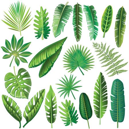 熱帯のベクトルを葉します。