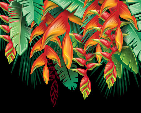 tropical: Tropical plants Heliconia and flowers Illustration