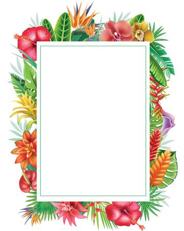 Frame van tropische planten