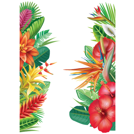Banner from tropical plants and flowers Illustration
