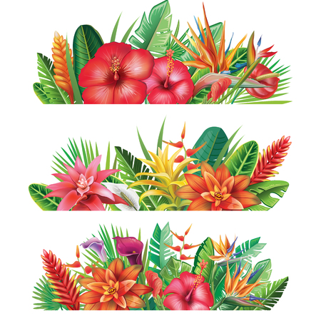 Banner from tropical plants and flowers illustration. Illustration