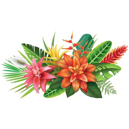 Arrangement from tropical flowers Illustration