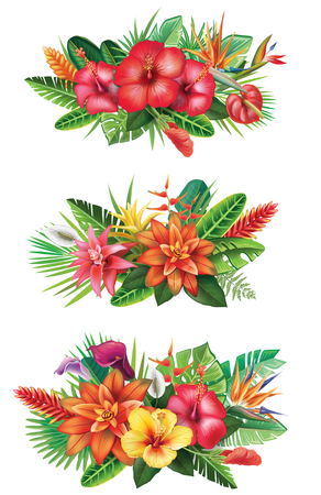 Arrangements from tropical flowers 向量圖像