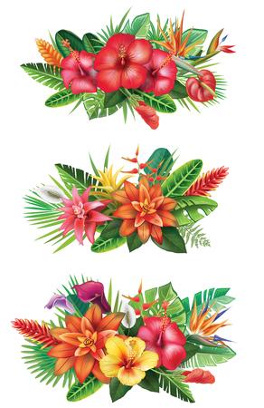 Arrangements from tropical flowers Stock Illustratie