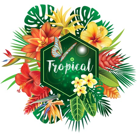 palm: Banner from tropical plants