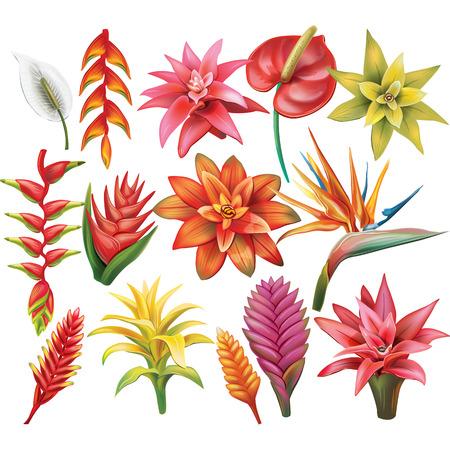 strelitzia: Set of Flowers.