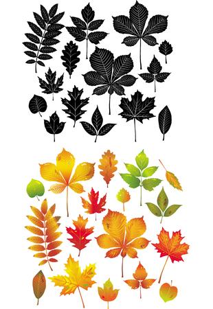 Colección de hojas de otoño Ilustración de vector