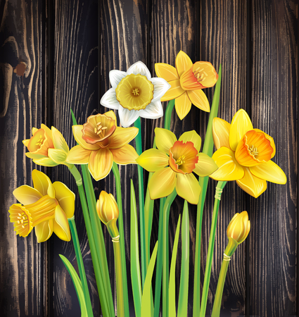 716 Daffodil High Res Illustrations - Getty Images