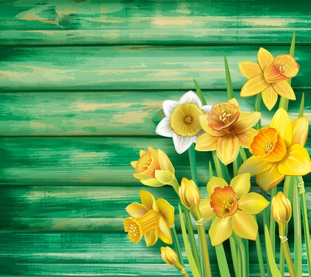 Daffodils flowers on the wooden background.