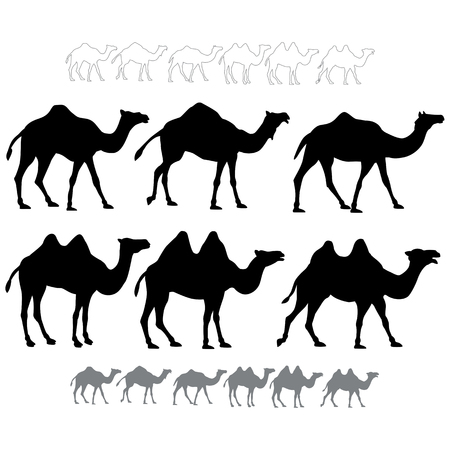 Set of black silhouettes vector camels.  Isolated on white background Illusztráció