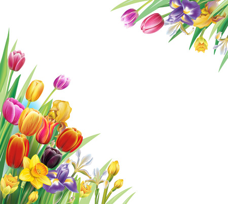 Arrangement with multicolor tulips flowers over white background