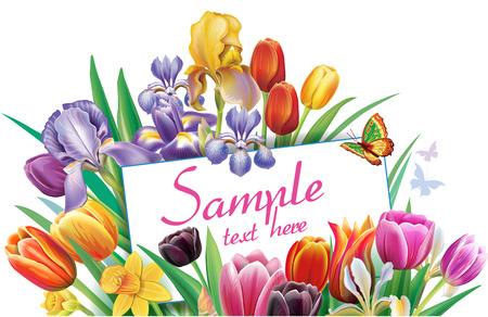 Arrangement with multicolor tulips flowers Banque d'images - 123392685