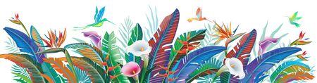 Tropical jungle plants, flower and hummingbirds, vector illustration Illustration