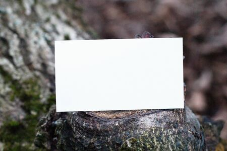 Photo of blank business cards on a wooden background