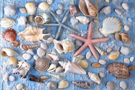 Background of seashells and starfishes on blue wooden planks