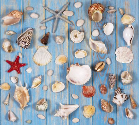 Background of seashells and starfishes on blue wooden planks. Creative flat lay concept of summer Archivio Fotografico