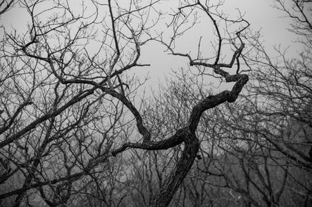 distort: Branches reaching death