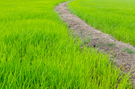 walking path: Green field with walking path Stock Photo