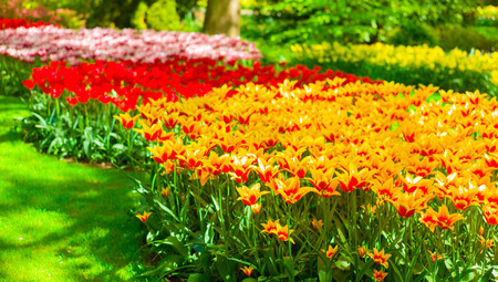 blosom: Beautiful flowers bed in spring time