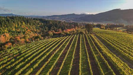 Aerial photo of a vineyard