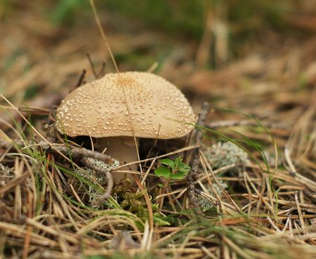 Toxic mushroom on moss in the forest         photo