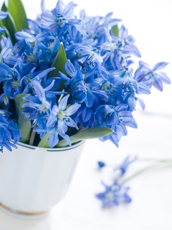 Wild blue spring flowers in cup. Shallow depth photo