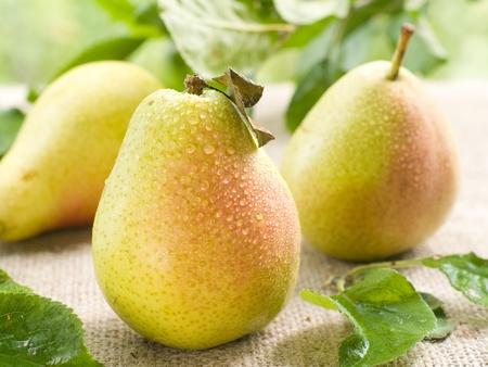 pear: Peras maduras frescas sobre fondo natural. Enfoque selectivo