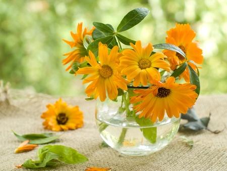 flower vase: The orange flowers of calendula in glass vase. Selective focus