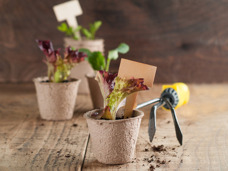 Vegetable seedlings on wooden table, selective focus. photo