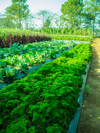 plot: vegetable plot, food production.