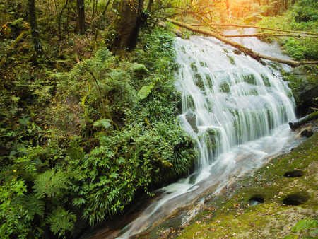 Waterfall in a forest green Stock Photo