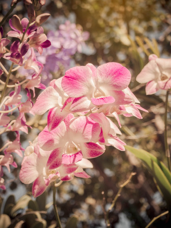 olant: Beautiful pink orchid