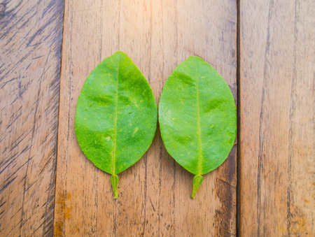 cleave: lime leaves on wood background, Fresh limes leaf on wooden background