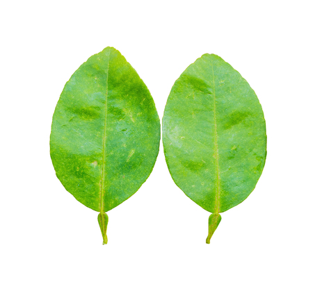 cleave: lime leaves on wood background  isolated on white background, Fresh limes leaf on wooden background isolated on white background Stock Photo