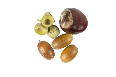 Nuts and buckeye isolated on a white background Stock Photo